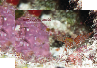 imprimer flyers poisson et crustace crevette crustace animal MIF39003