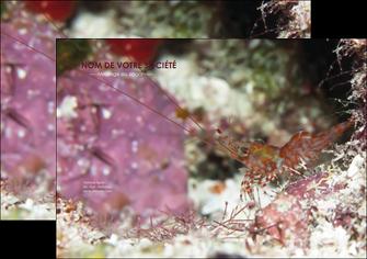 impression affiche poisson et crustace crevette crustace animal MIF39007