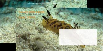 realiser enveloppe animal crevette crustace animal MIF40139