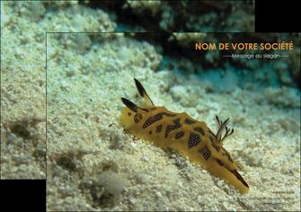 exemple flyers animal crevette crustace animal MIF40143